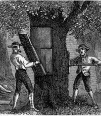 cork-tree-harvesting-black-white
